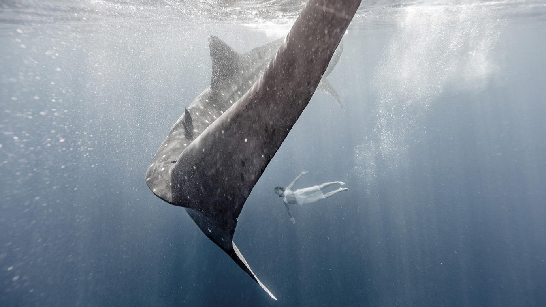 whale sharks photographer
