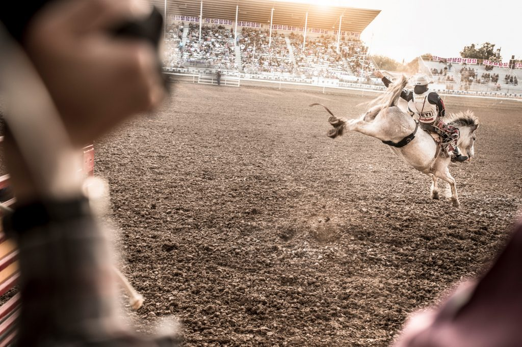 A Bronc Riding Cowboy in Jeans, Cowboy Hat and Western Wear Holds on. This Picture of a Western Rodeo Event is Part of a Fine-Art Series.