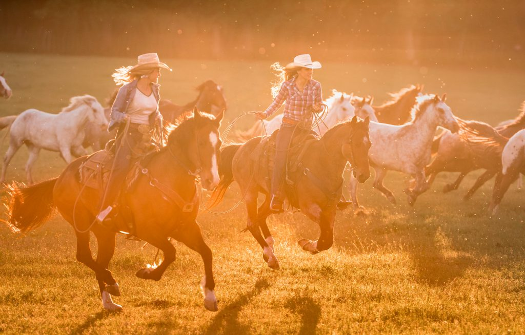 Durable Jeans, Boots, and Cowboy Hats are Part of Daily Life for Ranch Hands and Cowgirls. In this Professional Photograph, Two Cowgirls Dive the Herd into Higher Pastures.