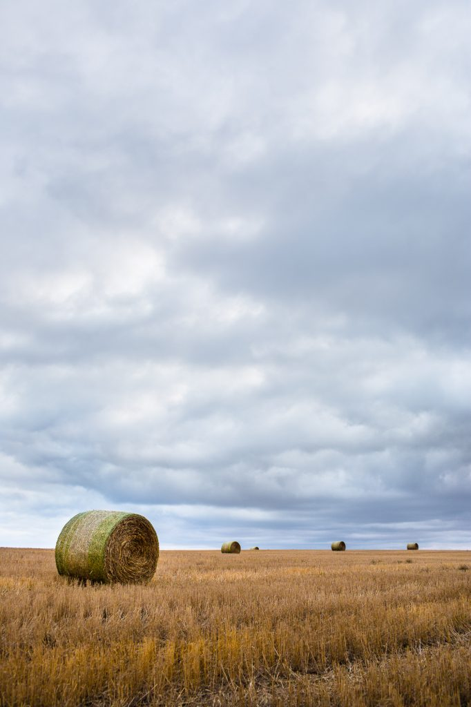 In Colorado, a Big Sky Opens Above Round Hay Bales on an Organic Farm. Grass-fed Cattle Depend on Hay from Organic Farms for Winter Feeding.