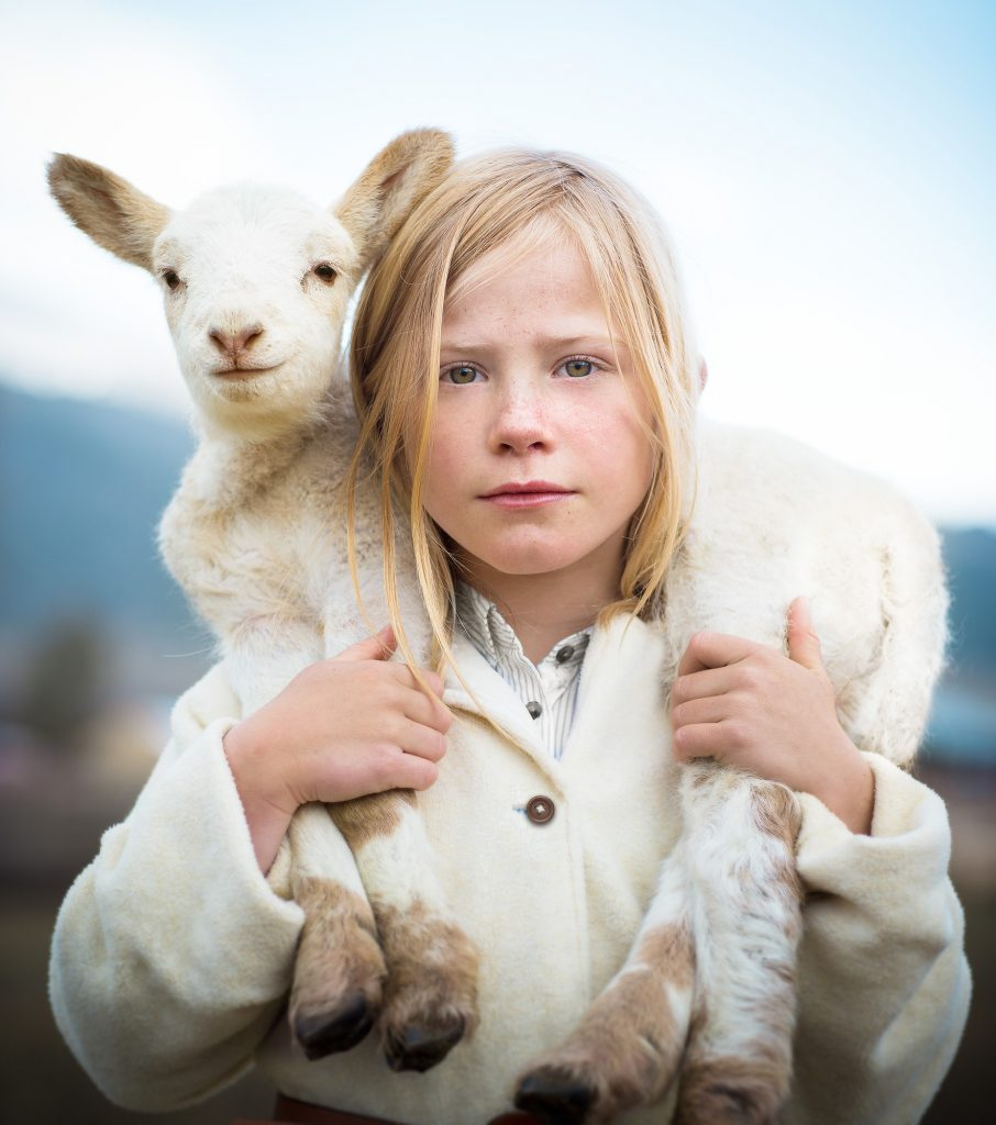 Living an Authentic Farm Lifestyle in Colorado Means Even Young Children Participate in the Farm Work and Animal Husbandry. This is a Beautiful Image of a Gentle Young Girl with her Lamb.